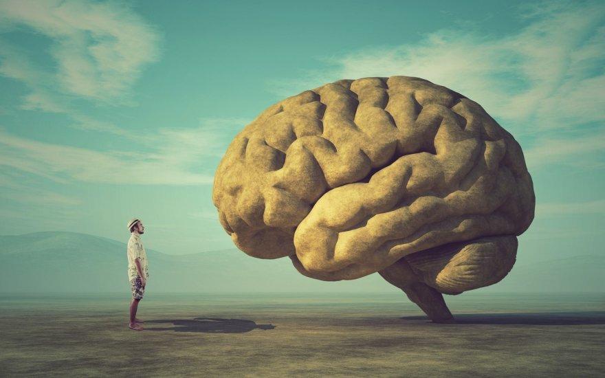 smegenų tendencijų prekybos sistema