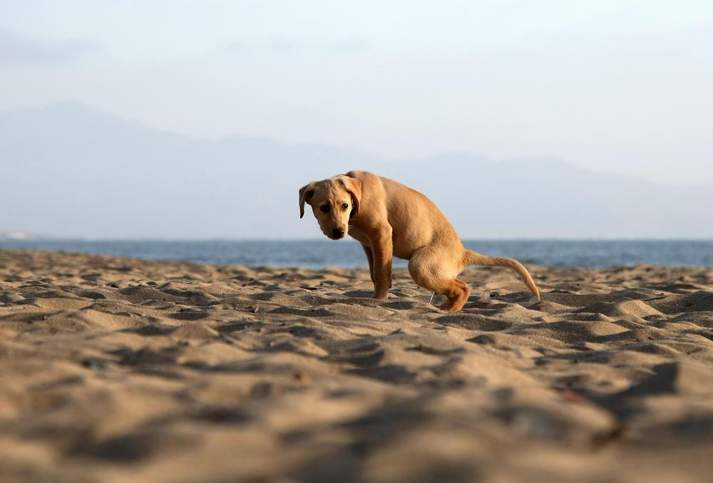 akcijų pasirinkimo galvijų šunys