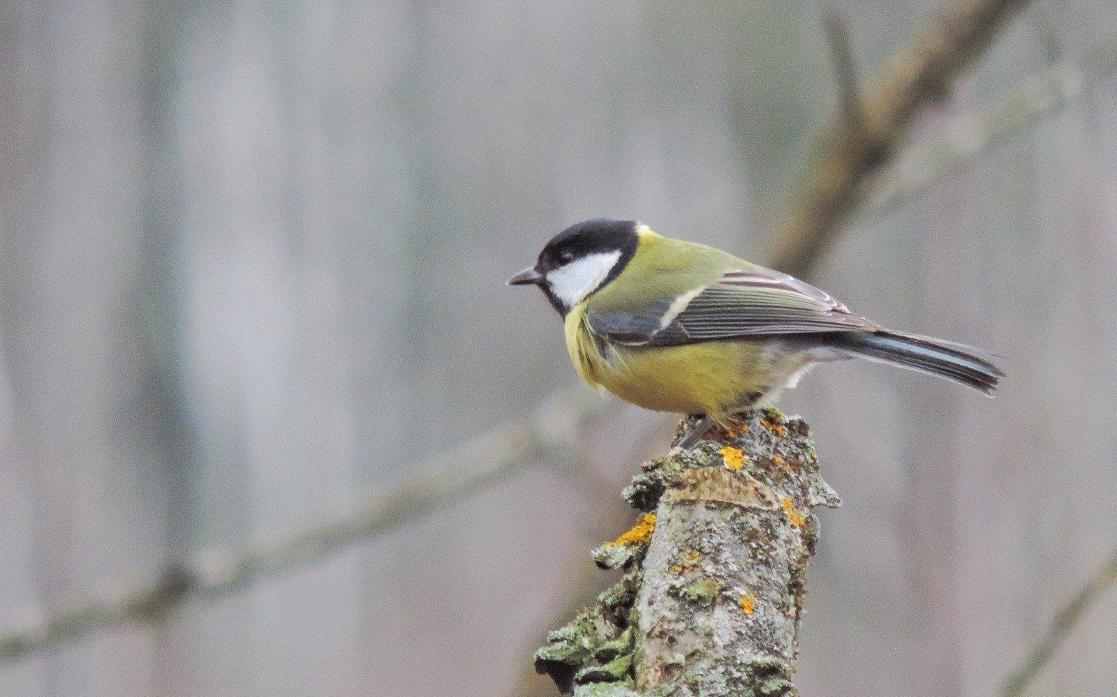 ankstyvosios paukščių prekybos sistema)