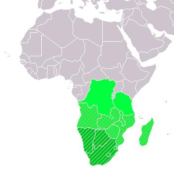 Uždengs stogais ir Afrikos namus - Verslo žinios