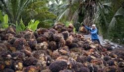 žalio palmių aliejaus prekybos strategija)