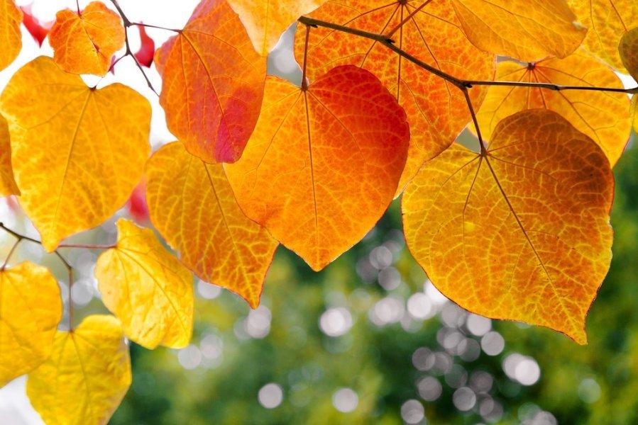 E. prekybos integravimas įmonėje: auginkime nuo šaknų, o ne lapų